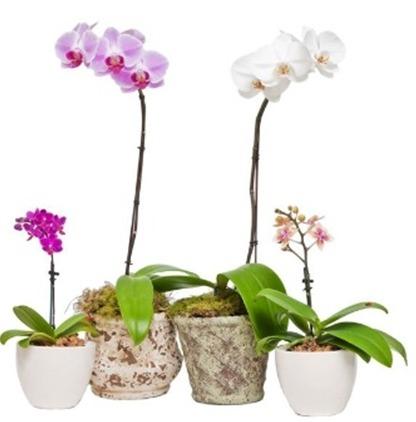 Conheça bem a espécie das orquídeas