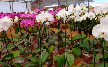 Cuidados Que Você Deve Ter Em Sua Casa Ou Apartamento Com As Orquídeas